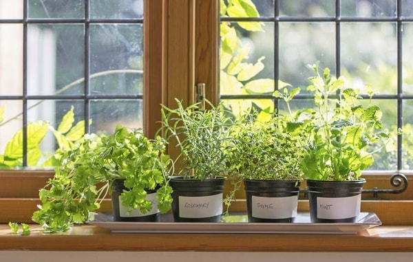Plants to grow at Home