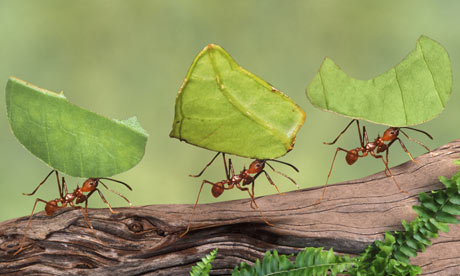 how to kill ants in house