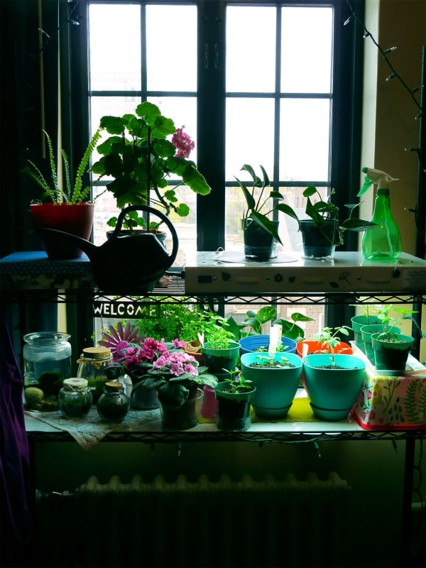 Cool indoor gardening