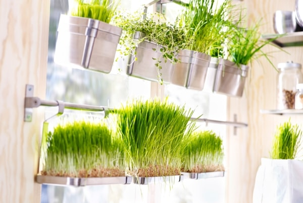 Grow Herbs Indoor in Kitchen
