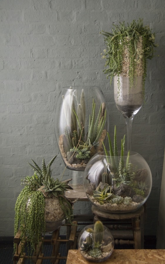 Grow House Plants