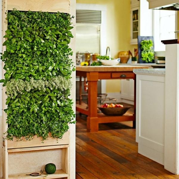 Grow easy House Plants