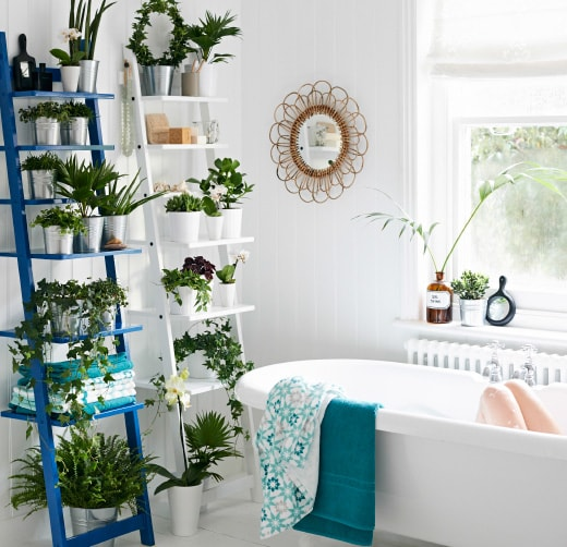 Growing Indoor Plants in Bathroom