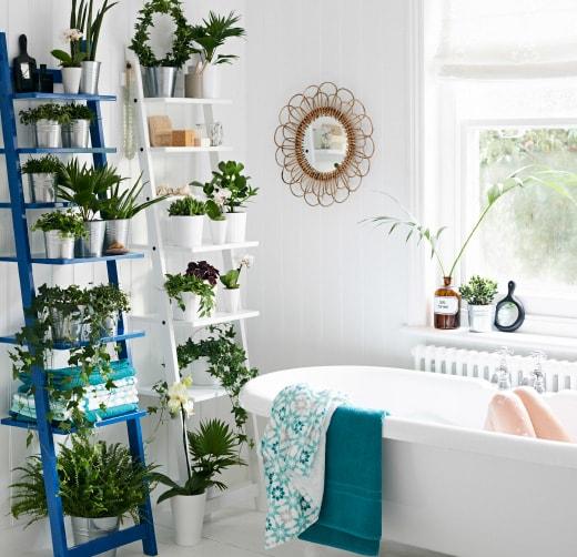Growing Indoor Plants in Bathroom