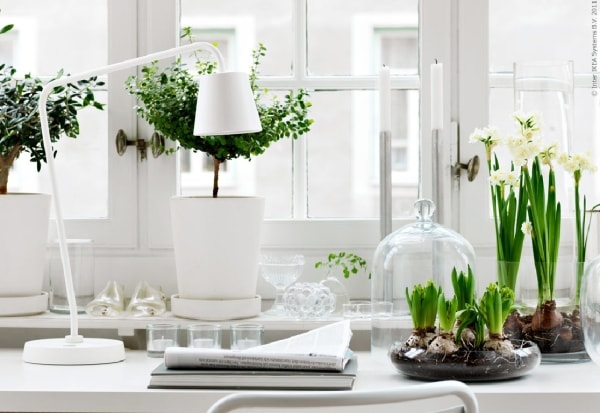 Modern look indoor garden