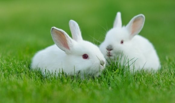 how to get rid of rabbits naturally