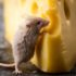 Best Mouse Poison - Mice repellents