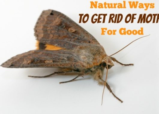 Get-Rid-Of-Moths-naturally