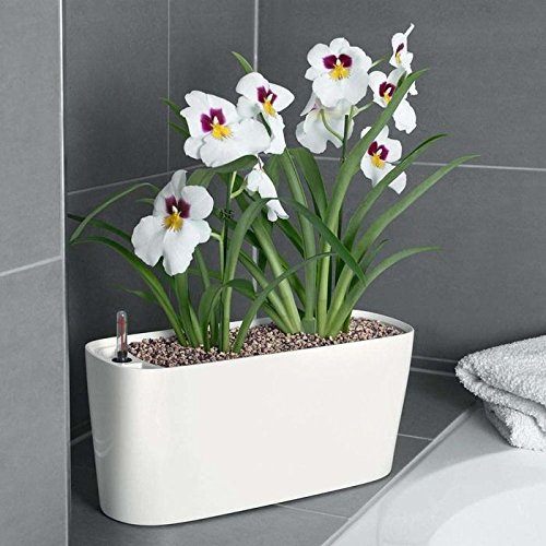 self-watering-planter-for-windowsills-small-spaces