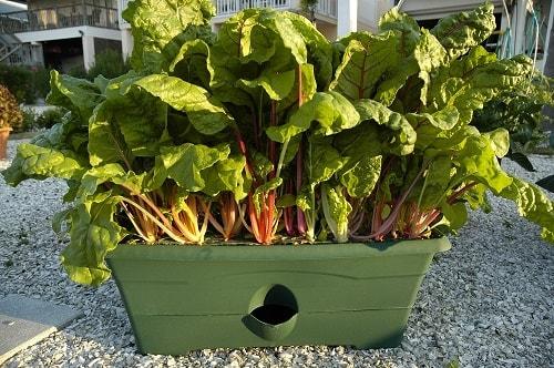 growbox-garden-patch