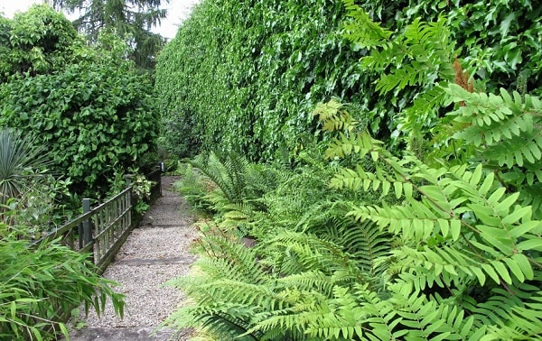 ways on how to care ferns indoor and outdoor