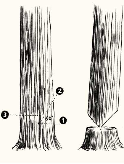 how-to-fell-a-tree-3