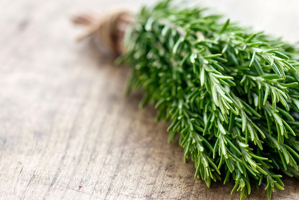How to Harvesting Rosemary