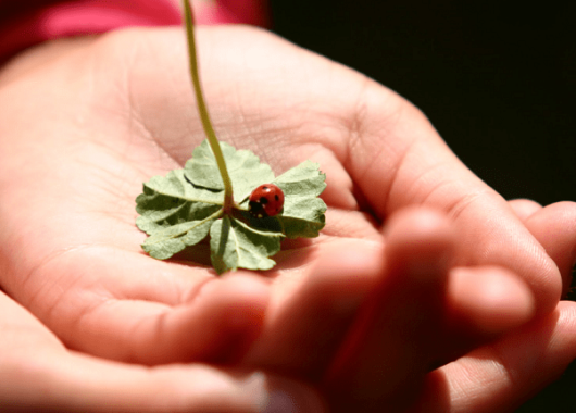 How to Care your Pet Ladybugs & What do they Eat