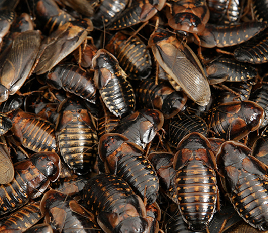 how to get rid of coackroaches - killers