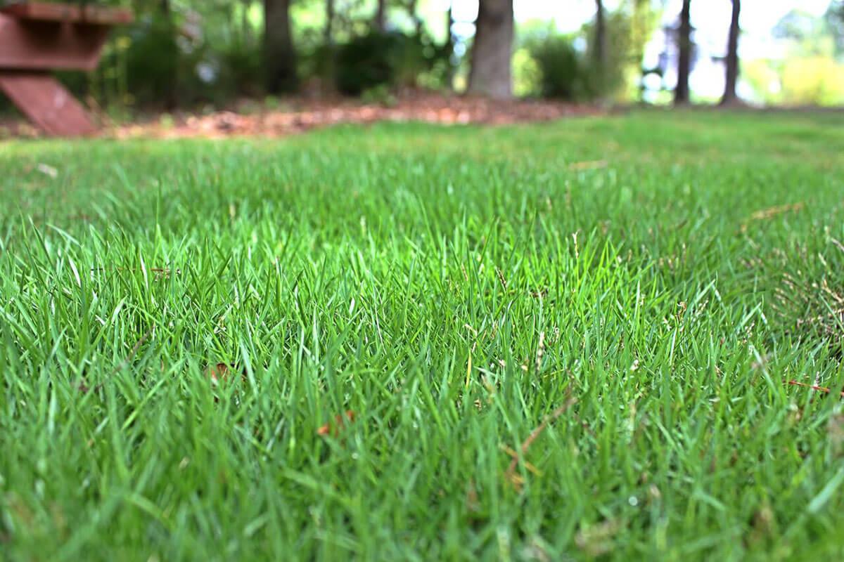 Zoysia Grass: Types, P...