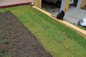 Centipede Grass Sod