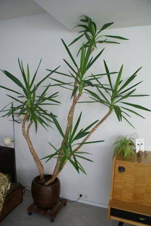 Low Light Outdoor Plants