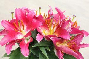 Starlight Express Lily