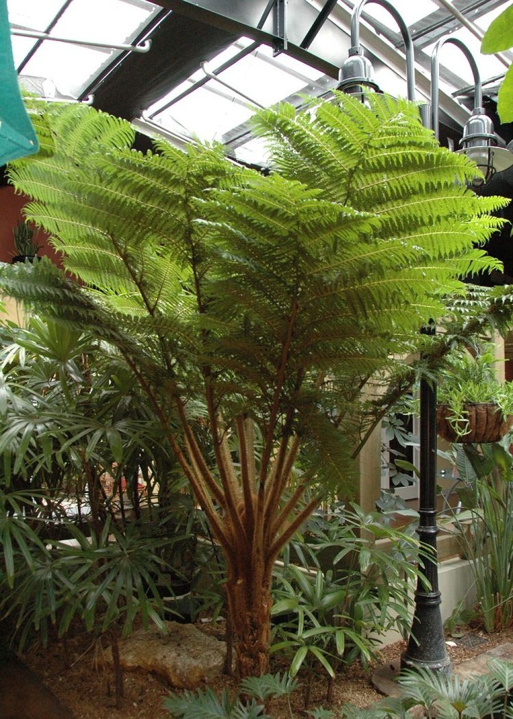 Types Of Outdoor Ferns.30 Types Of Indoor And Outdoor Ferns With Pictures