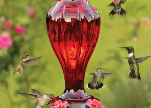 Hummingbirds Feeder