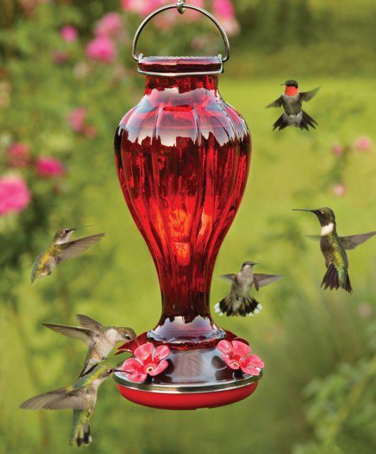 Hummingbirds Feeder