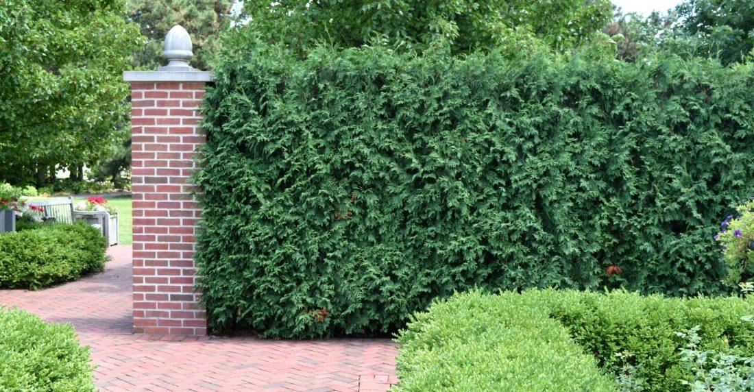 Privacy Plants