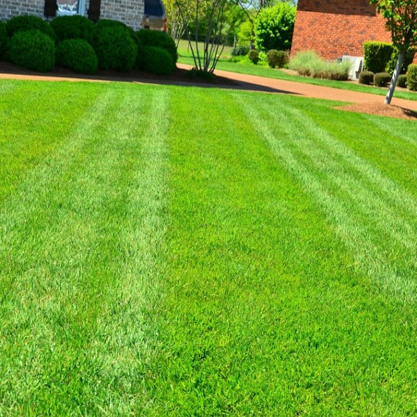 12 Of The Best Drought Resistant Grasses For A Greener Lawn