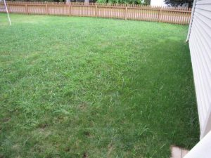Most Drought-Tolerant Wheatgrass